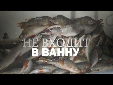 Рыбалка на Севере Нефтеюганск Сургут ОГРОМНЫЙ улов + ВЛОГ и кролики НЕ КЛИКБЕЙТ ТОЧНО