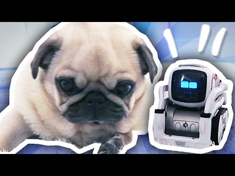 COZMO THE ROBOT MEETS THE PUGS!!!