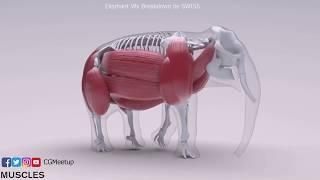 MPC Money Supermarket Elephant VFX Breakdown HD