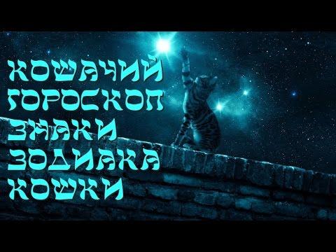 Какие знаки Зодиака подходят Овну :: гороскоп овну