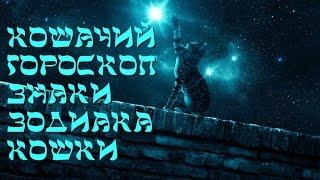 Кошачий гороскоп   знаки зодиака кошки