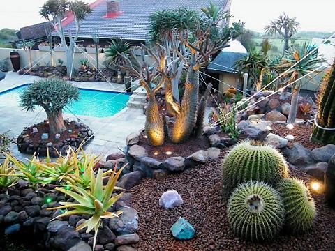 cactus garden design succulent