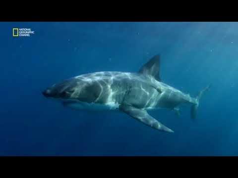 Супер хищники океана