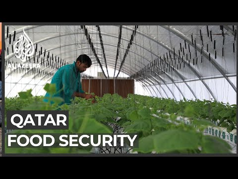 Qatar food security: Doha becomes less reliant on imported g