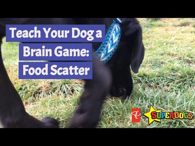 SuperDogs | Brain Games - Food Scatter | Dog Training