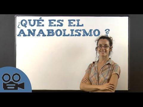 qué es el anabolismo  youtube