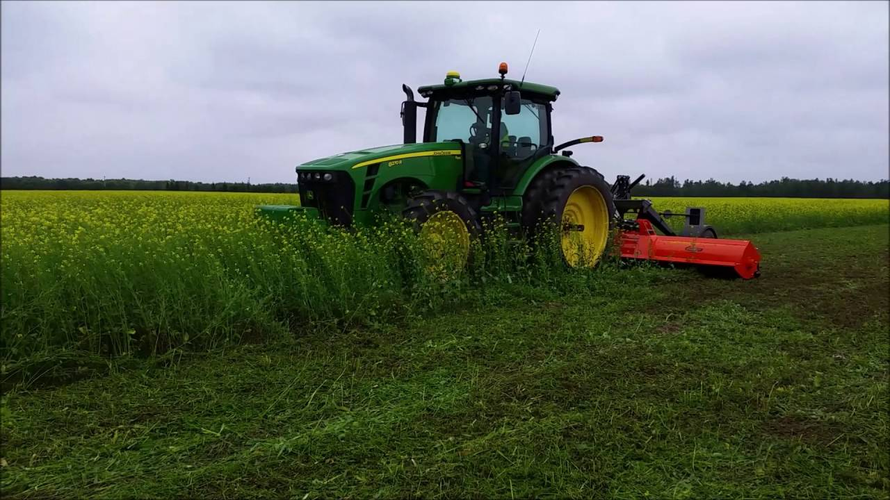 Perfect RX-620 large surface flail mower chopping yellow mustard