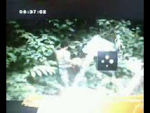 ความจริงที่โลกต้องตะลึง79 ฝันเห็นขบวนแห่ช้างช้างป่าลงมาพังป้ายภูหลวง