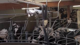 Roto GEA 36 postes - Journée Prim'Holstein 53 - août 2016