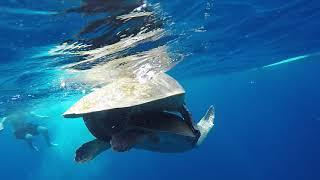 Turtle Porn Sri Lanka Sun Diving Center