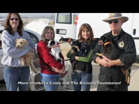 San Bernardino City Shelter March 2nd 2010