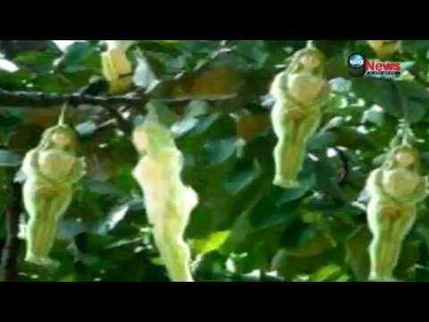 Nareepol:  नारी शरीर के आकार का हैरान करने वाला फूल