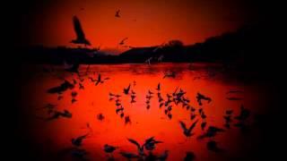 Worakls ~ When The Birds Go In The Wrong Way (N