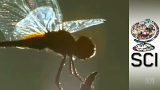 How Insect Wings Are Revolutionising Surgical Safety