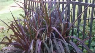 Gardening Tips -- How to Divide Ornamental Grasses