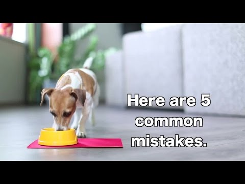 5 Ways You're Feeding Your Dog Wrong
