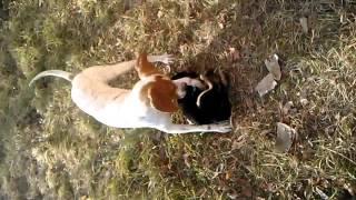 видео: Нереально ...собака помогает