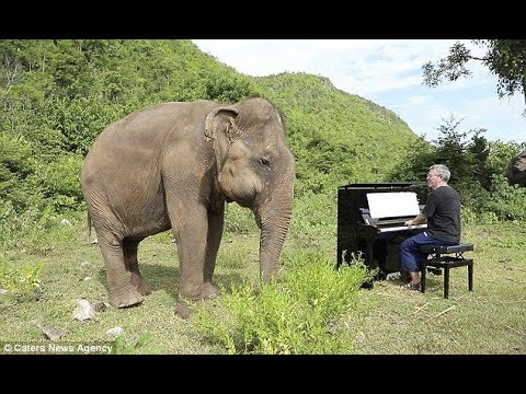 British Pianist Performs Classic Music For Blind Elephant Youtube