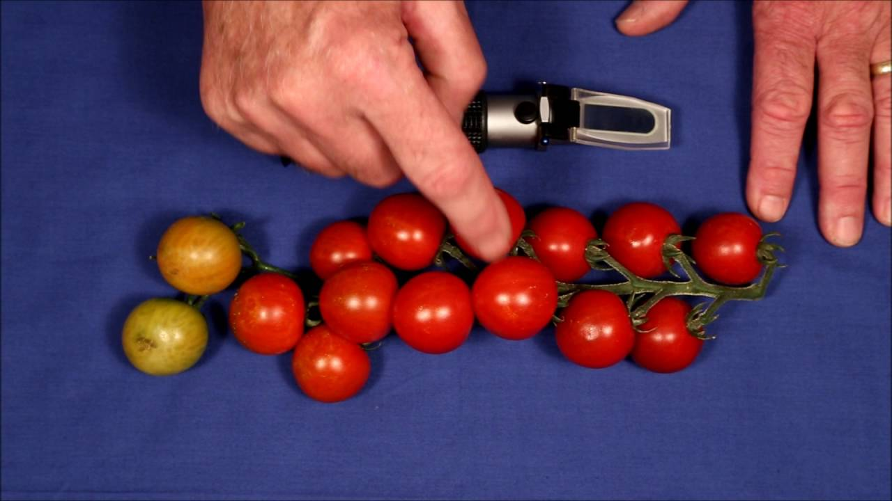 How To Get The Sweetest Cherry Tomatoes