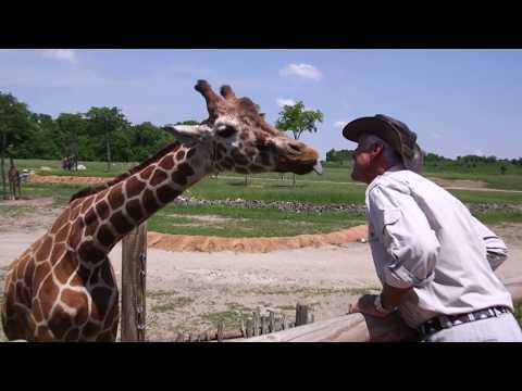 Jack Hanna's 40 years at the Columbus Zoo
