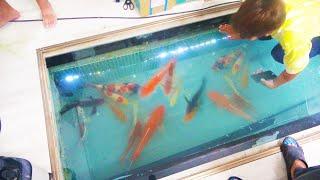 【完】地下水槽に大量の鯉を飼います!次の大改造は⁉【謎ため池S2 #20】