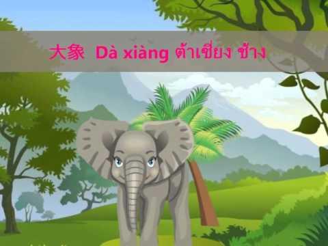 คำศัพท์ภาษาจีน เรื่องสัตว์