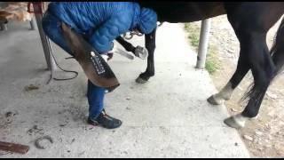 Лошади карачаевской породы