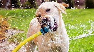 Funny Dogs 🐶 Cute Dogs Playing With Water (Part 2) [Funny Pets]