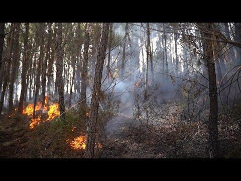 خبراء مناخ وإطفائيون إسبان يعملون على إنشاء نظام يتنبأ بحرائق الغابات…  - نشر قبل 49 دقيقة