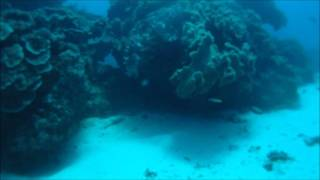2011 Bundaberg Skindivers Spearfishing Competition