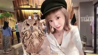 珍妮花帶你玩-日本最大级别的貓頭鷹咖啡屋Happy Owl Café chouette