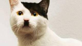 فيديو| سر عودة أدلف هتلر فى شكل قطة!