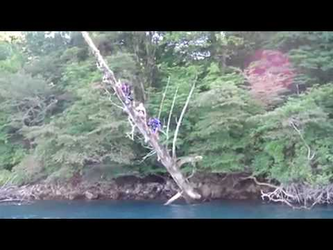 jet diving! mpeg2video