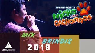 Mix Brindis  Nicho y sus Cachorros 2019