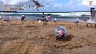 Sphero SPRK and BB-8 Robots Rolling in Manly