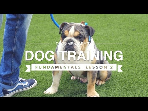 DOG TRAINING FUNDAMENTALS: LESSON 2 RECALL