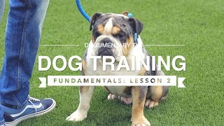 DOG TRAINING FUNDAMENTALS: LESSON 2 RECALL