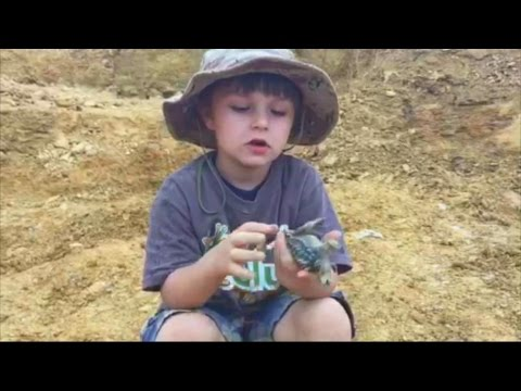 Dinosaur Discovery: 5-Year-Old Finds Bones