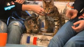 Экзотические Кошки | Пробуддись | НЛО TV