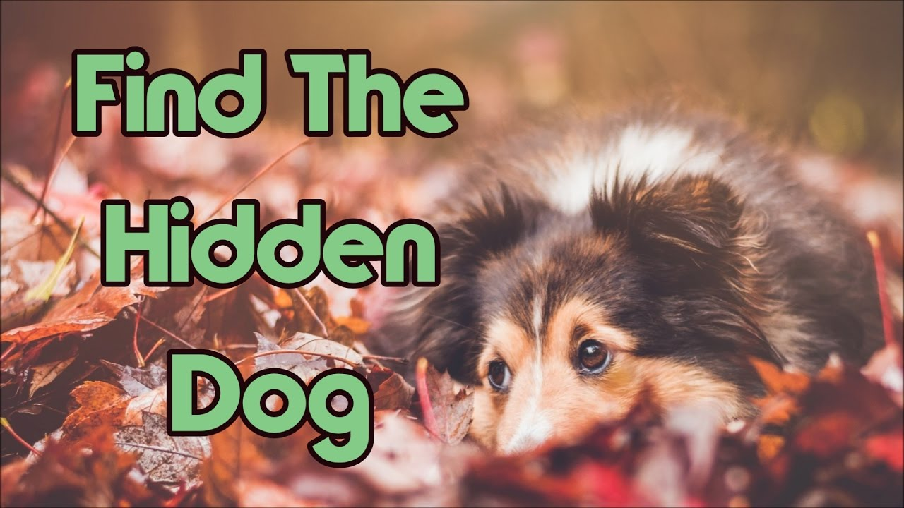 can-you-find-the-hidden-dog-in-under-5-seconds