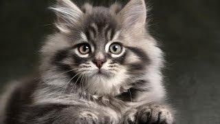 кошки/cats vol.1