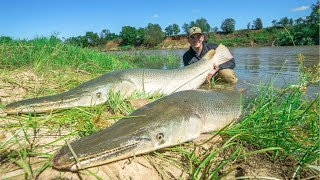 Catching 2 GIANT Alligator Gar at ONCE!!! (150LBS)