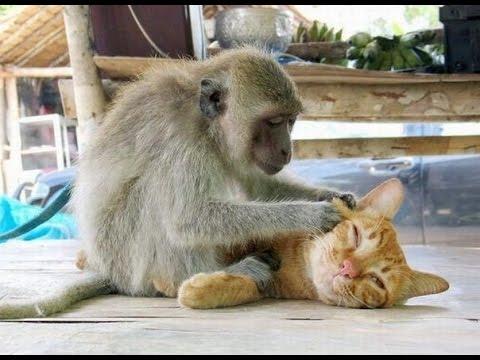 The Best Funny Animals. Веселые и неповторимые видео с животными. Подборка веселых видео 2015