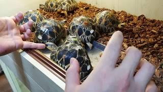 잘못키우면 범죄자됩니다ㄷㄷ 6천만원짜리 거북이들이 한자…