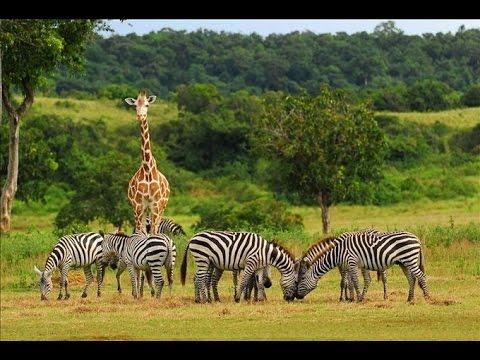Panoramio - Photo of Kenya, Tsavo: viavai in savana