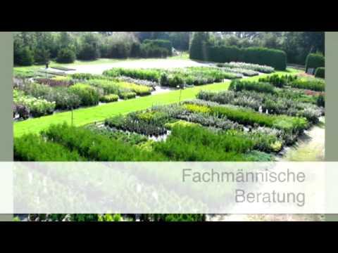 Heckenpflege bremerv rde baumschule gartengestaltung kranz for Gartengestaltung youtube