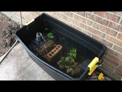 DIY container pond
