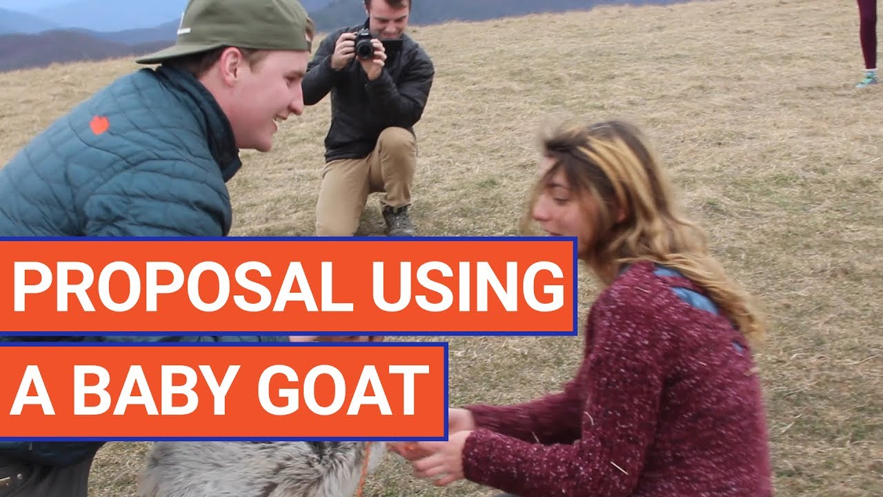 Sweet Man Proposes With a Goat