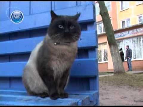 Самый преданный кот