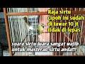 Sirtu Cipoh Cipow Sirpu Sirdung Betina Gacor Merdu Suaranya Full Isian Kacer Muray Cucak Ijo  Mp3 - Mp4 Download